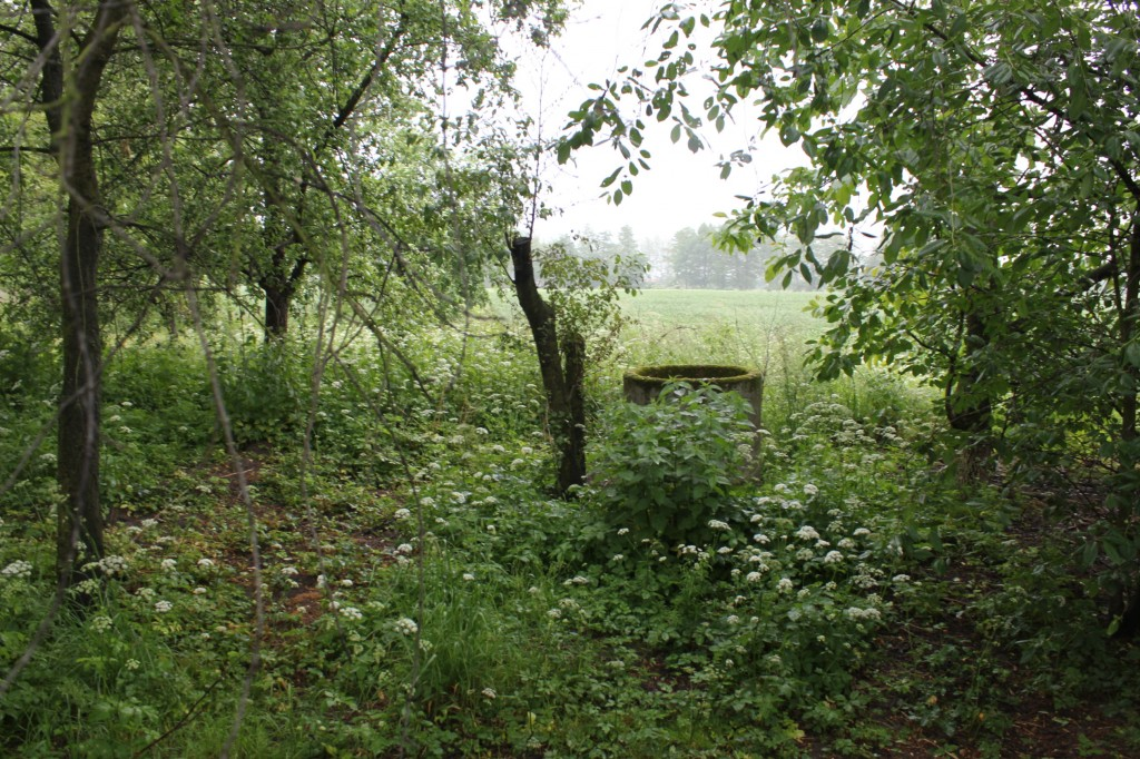 An overgrown orchard and a well. That's all that is left...